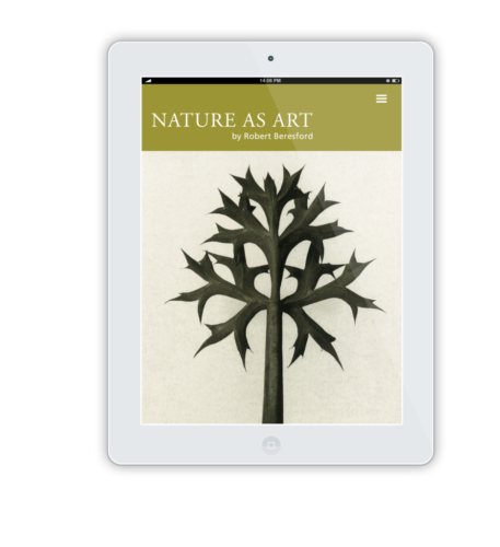 NatureAsArt iPad Flat Mockup 9 1
